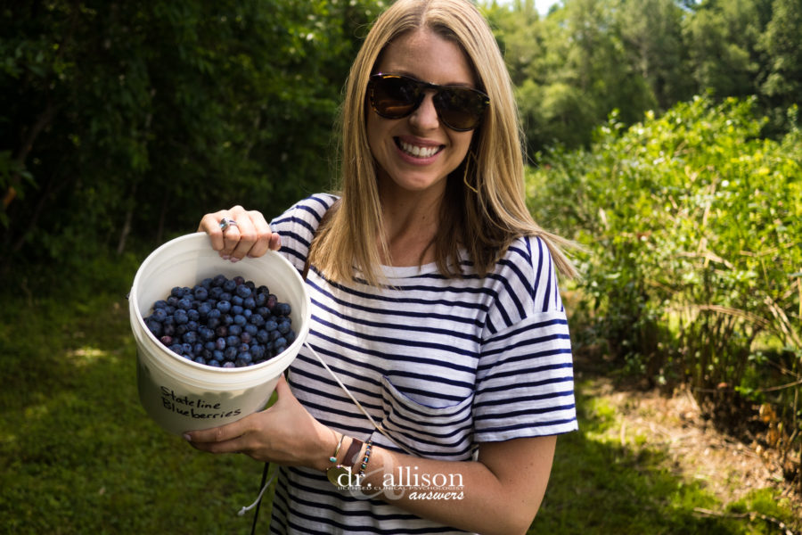 Blueberry Picking at Stateline Blueberries