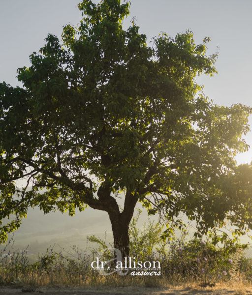 Simplify Your Life: 9 Quotes to Inspire You, Dr. Allison Answers
